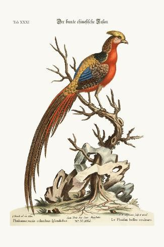 The Painted Pheasant from China, 1749-73-George Edwards-Stretched Canvas Print