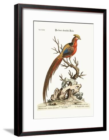 The Painted Pheasant from China, 1749-73-George Edwards-Framed Art Print
