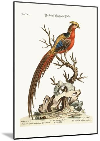 The Painted Pheasant from China, 1749-73-George Edwards-Mounted Giclee Print