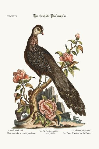 The Peacock Pheasant from China, 1749-73-George Edwards-Stretched Canvas Print