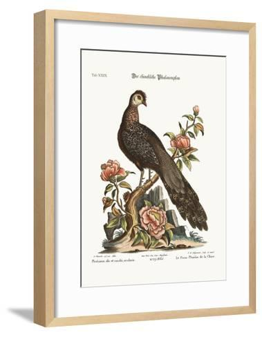 The Peacock Pheasant from China, 1749-73-George Edwards-Framed Art Print