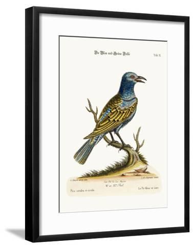 The Blue and Green Daw, 1749-73-George Edwards-Framed Art Print