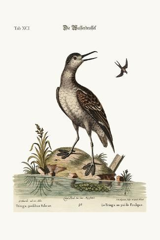 The Coot-Footed Tringa, 1749-73-George Edwards-Stretched Canvas Print