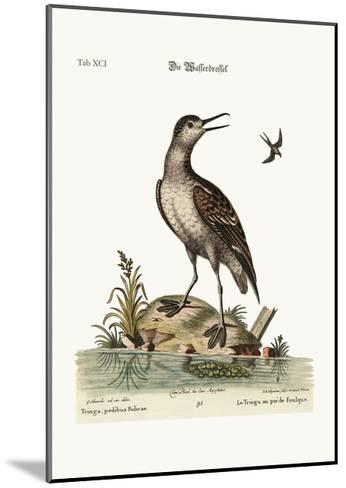 The Coot-Footed Tringa, 1749-73-George Edwards-Mounted Giclee Print