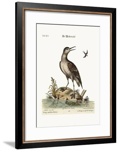 The Coot-Footed Tringa, 1749-73-George Edwards-Framed Art Print