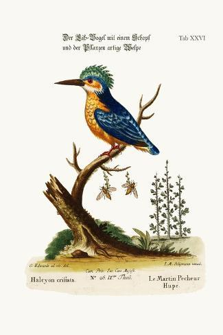 The Crested Kingfisher, 1749-73-George Edwards-Stretched Canvas Print