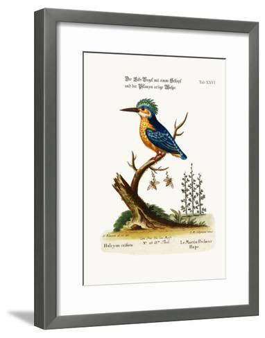 The Crested Kingfisher, 1749-73-George Edwards-Framed Art Print