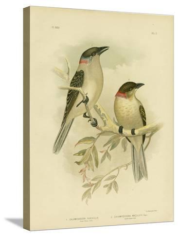 Great Bowerbird, 1891-Gracius Broinowski-Stretched Canvas Print