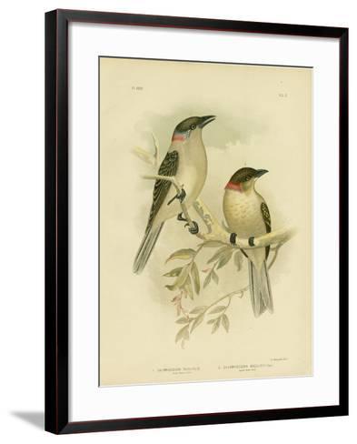 Great Bowerbird, 1891-Gracius Broinowski-Framed Art Print