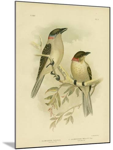 Great Bowerbird, 1891-Gracius Broinowski-Mounted Giclee Print