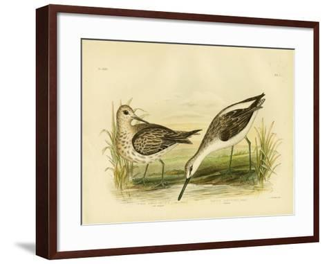 Great Sandpiper, 1891-Gracius Broinowski-Framed Art Print