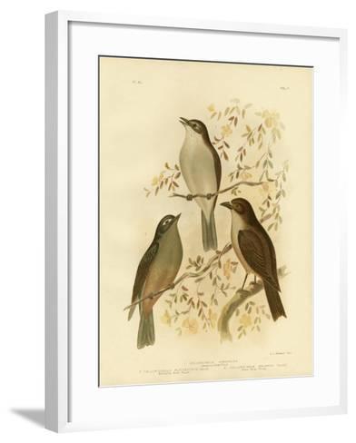 Harmonious Shrike-Thrush or Grey Shrike-Thrush, 1891-Gracius Broinowski-Framed Art Print