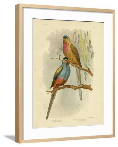Princess of Wales Parakeet or Princess Parrot, 1891-Gracius Broinowski-Framed Art Print