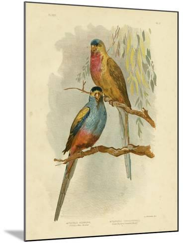 Princess of Wales Parakeet or Princess Parrot, 1891-Gracius Broinowski-Mounted Giclee Print