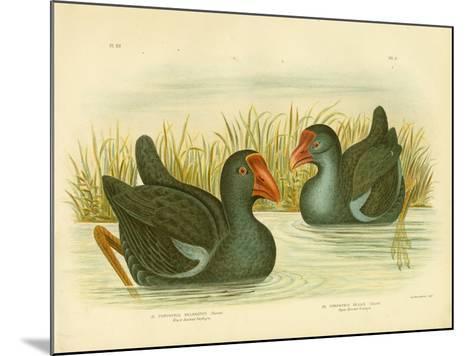 Black-Backed Porphyrio, 1891-Gracius Broinowski-Mounted Giclee Print