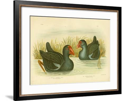 Black-Backed Porphyrio, 1891-Gracius Broinowski-Framed Art Print