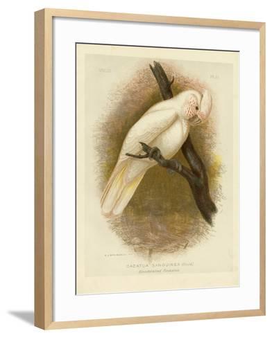 Blood-Stained Cockatoo, 1891-Gracius Broinowski-Framed Art Print