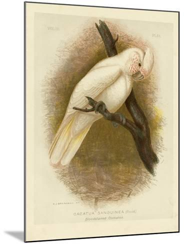 Blood-Stained Cockatoo, 1891-Gracius Broinowski-Mounted Giclee Print