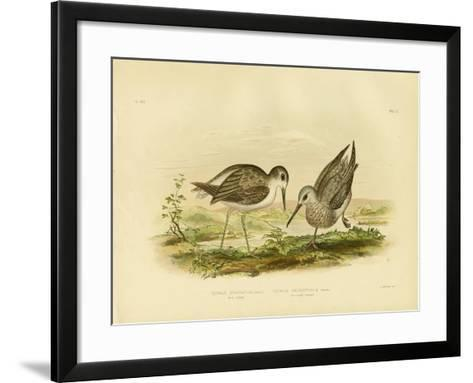 Marsh Sandpiper, 1891-Gracius Broinowski-Framed Art Print