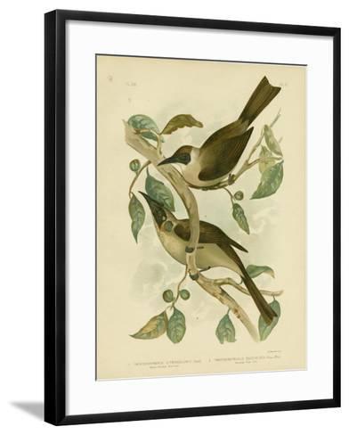Yellow-Throated Friarbird or Little Friarbird, 1891-Gracius Broinowski-Framed Art Print