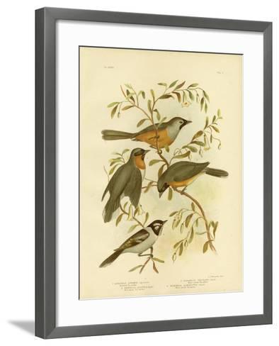 Carinated Flycatcher or Black-Faced Monarch, 1891-Gracius Broinowski-Framed Art Print