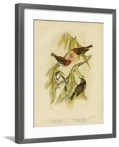 Sanguineous Honeyeater, 1891-Gracius Broinowski-Framed Art Print