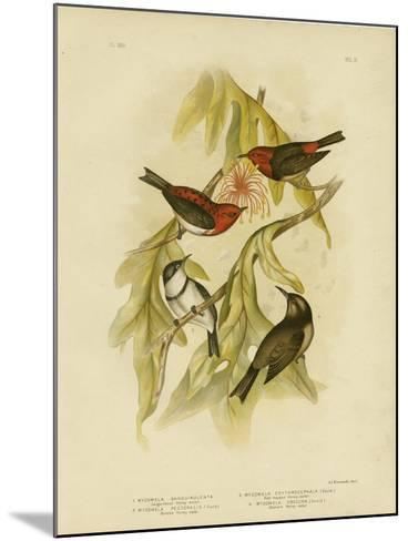 Sanguineous Honeyeater, 1891-Gracius Broinowski-Mounted Giclee Print