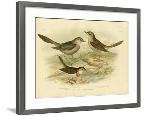 Brown Songlark, 1891-Gracius Broinowski-Framed Art Print