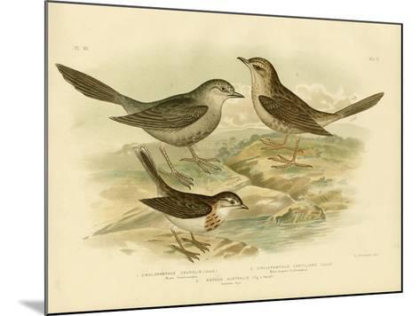 Brown Songlark, 1891-Gracius Broinowski-Mounted Giclee Print