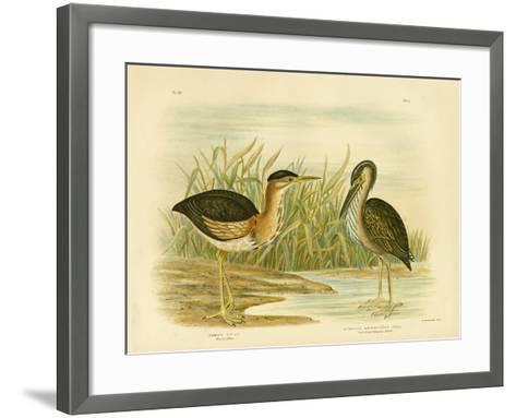 Minute Bittern, 1891-Gracius Broinowski-Framed Art Print