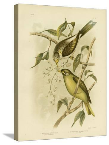 Luteous Honeyeater or Yellow-Throated Miner, 1891-Gracius Broinowski-Stretched Canvas Print