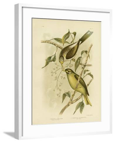 Luteous Honeyeater or Yellow-Throated Miner, 1891-Gracius Broinowski-Framed Art Print