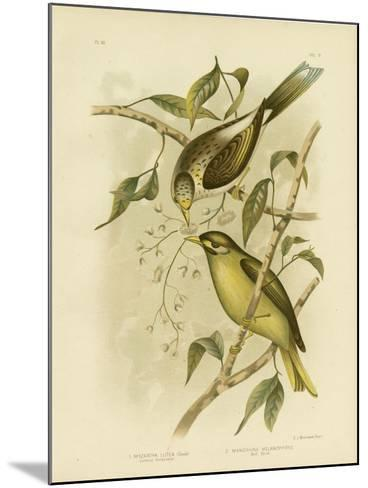 Luteous Honeyeater or Yellow-Throated Miner, 1891-Gracius Broinowski-Mounted Giclee Print
