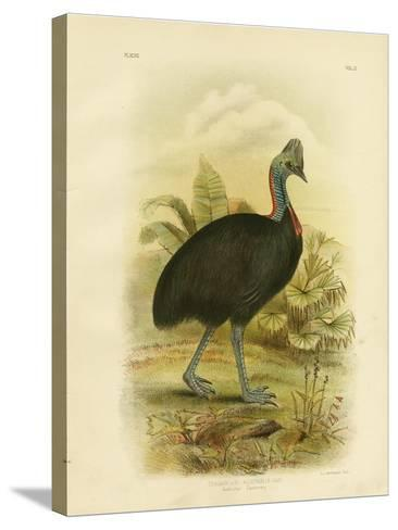 Australian Cassowary or Southern Cassowary, 1891-Gracius Broinowski-Stretched Canvas Print