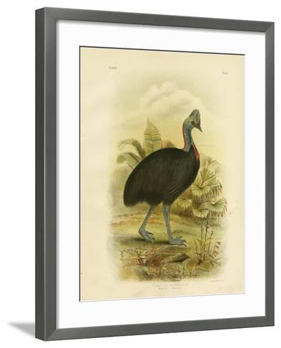 Australian Cassowary or Southern Cassowary, 1891-Gracius Broinowski-Framed Art Print