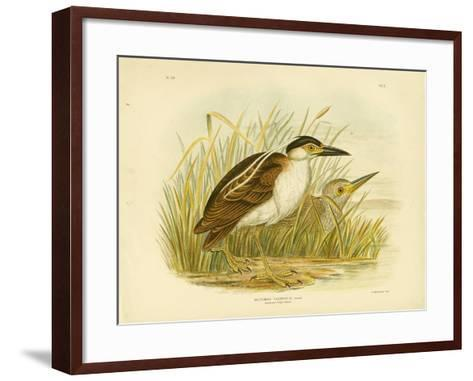 Nankean Night Heron or Nankeen Night Heron, 1891-Gracius Broinowski-Framed Art Print