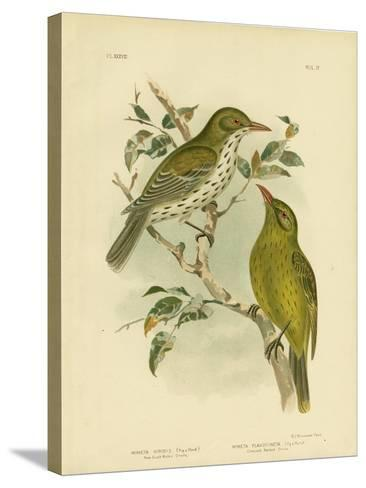 New South Wales Oriole or Green Oropendola, 1891-Gracius Broinowski-Stretched Canvas Print