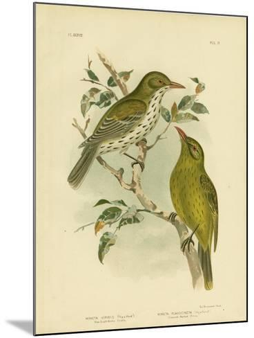 New South Wales Oriole or Green Oropendola, 1891-Gracius Broinowski-Mounted Giclee Print