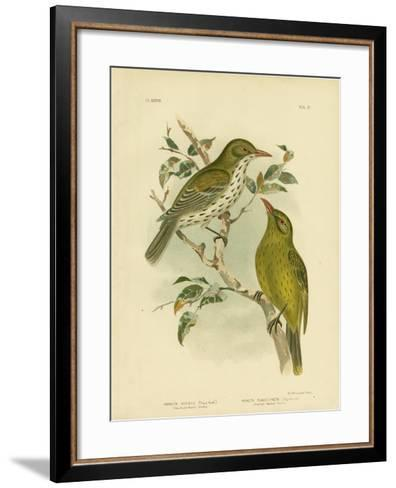 New South Wales Oriole or Green Oropendola, 1891-Gracius Broinowski-Framed Art Print