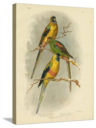 Yellow-Vented Parakeet, 1891-Gracius Broinowski-Stretched Canvas Print