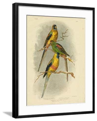 Yellow-Vented Parakeet, 1891-Gracius Broinowski-Framed Art Print