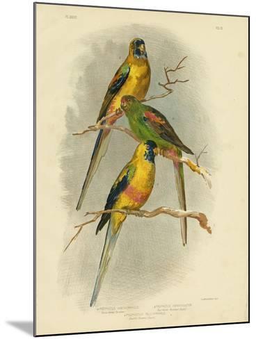 Yellow-Vented Parakeet, 1891-Gracius Broinowski-Mounted Giclee Print