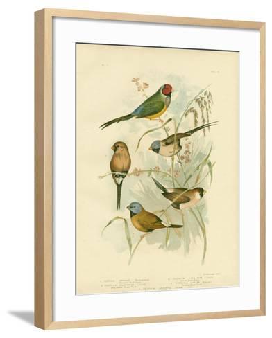 Beautiful Grass-Finch, 1891-Gracius Broinowski-Framed Art Print