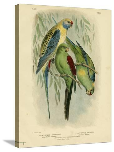 Blue-Cheeked Parakeet, 1891-Gracius Broinowski-Stretched Canvas Print