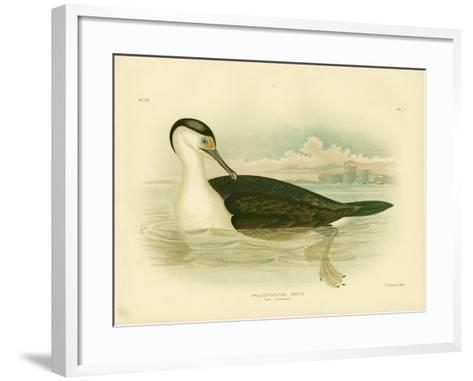 Pied Cormorant, 1891-Gracius Broinowski-Framed Art Print