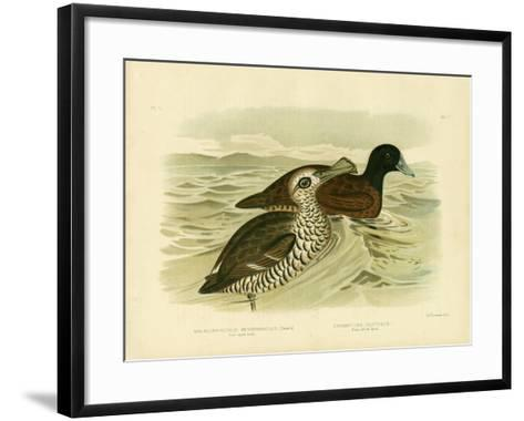 Pink-Eyed Duck, 1891-Gracius Broinowski-Framed Art Print