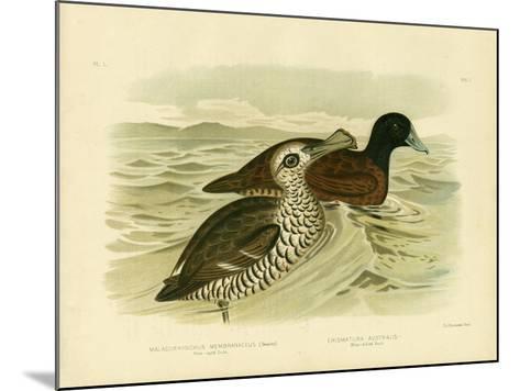 Pink-Eyed Duck, 1891-Gracius Broinowski-Mounted Giclee Print