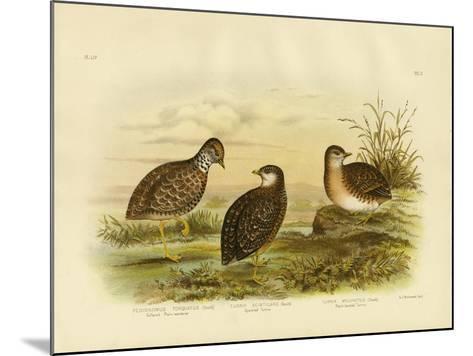 Collared Plainwanderer or Plains Wanderer, 1891-Gracius Broinowski-Mounted Giclee Print