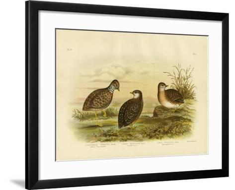 Collared Plainwanderer or Plains Wanderer, 1891-Gracius Broinowski-Framed Art Print