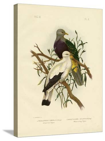 Allied Fruit Pigeon or Wompoo Fruit-Dove, 1891-Gracius Broinowski-Stretched Canvas Print